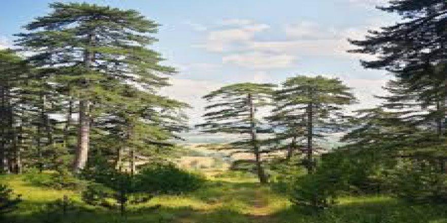 Yeniçağa Hamzabey Köyü Resimleri