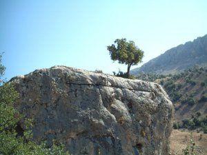 Adıyaman Ağaçkonak Köyü Resimleri