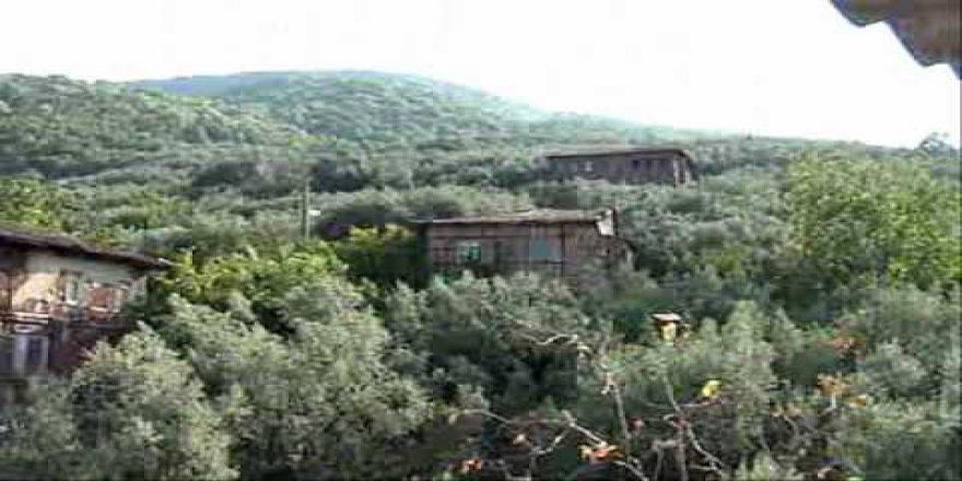 Şiran Paşapınarı Köyü Resimleri