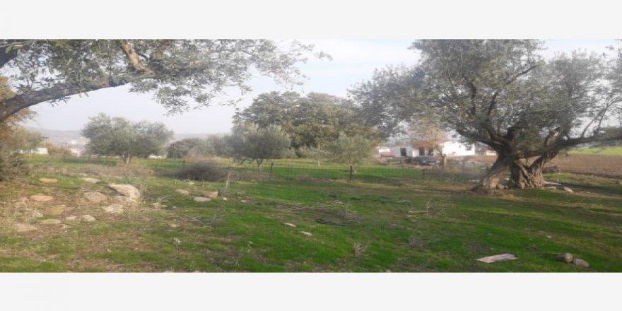 Yunusemre Pınarköy Köyü Resimleri