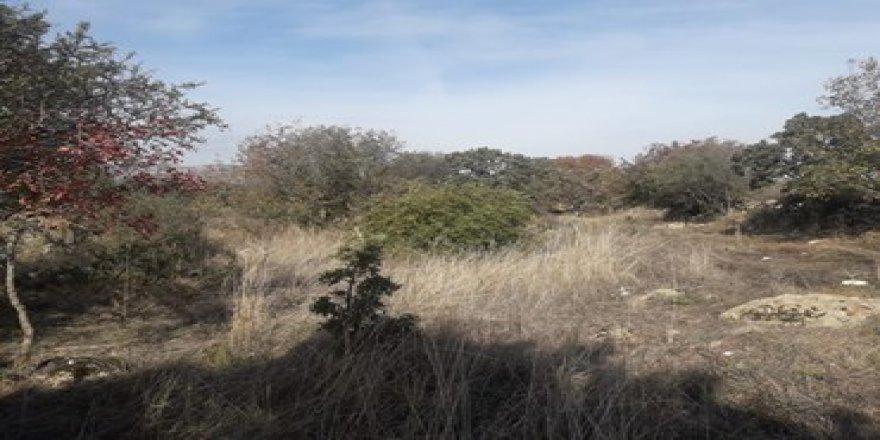 Yunusemre Şamar Köyü Resimleri
