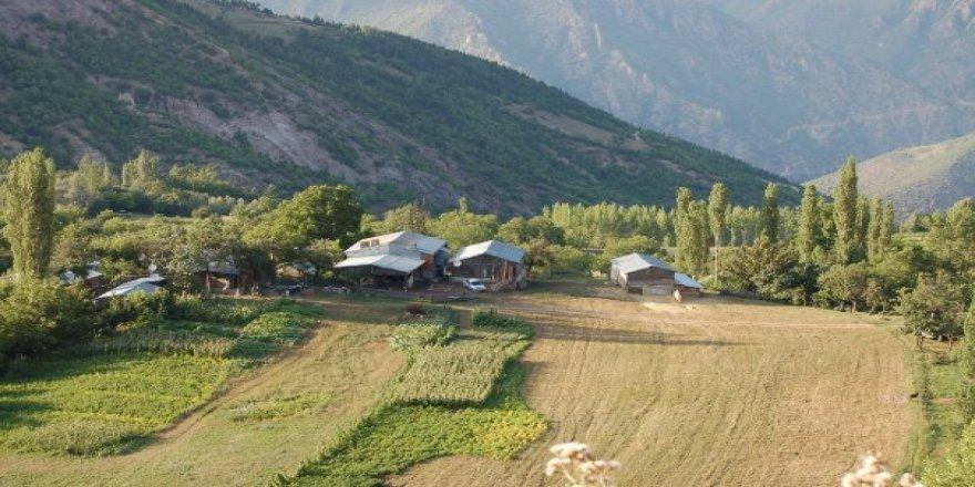 Artvin Ardanuç Anaçlı Köyü Resimleri
