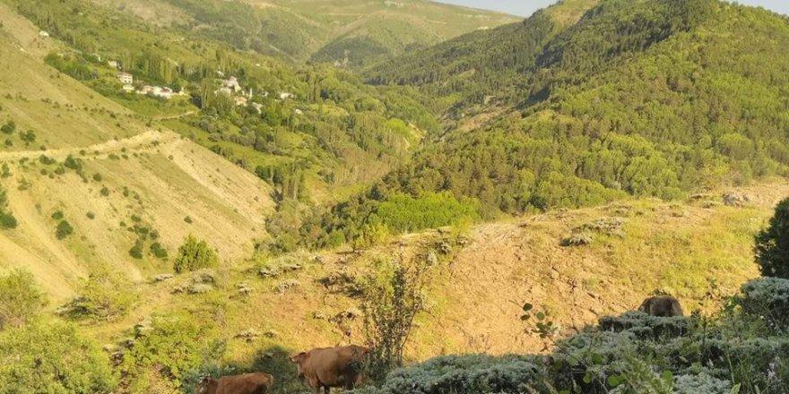 Alucra Kabaktepe Köyü Resimleri