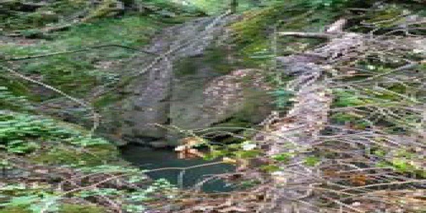 Biga Arabaalan Köyöü Resimleri