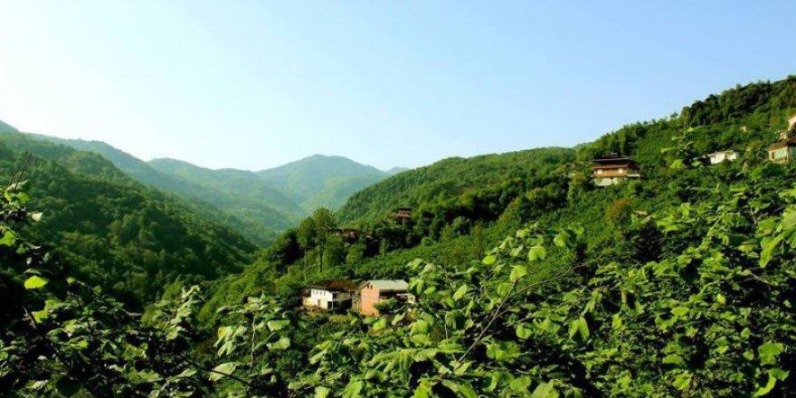 Araklı Bereketli Köyü Resimleri
