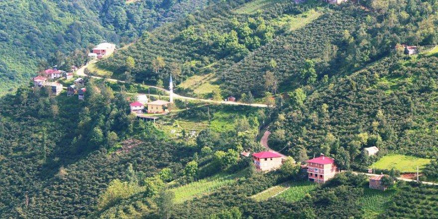 Bulancak Yeşiltepe Köyü Resimleri