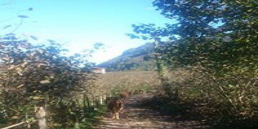 Bulancak Yunuslu Köyü Resimleri