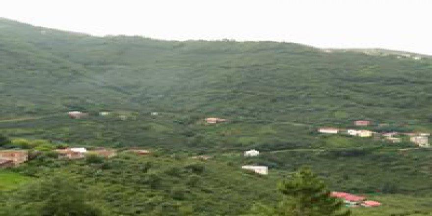 Dereli Çengelköy Köyü Resimleri