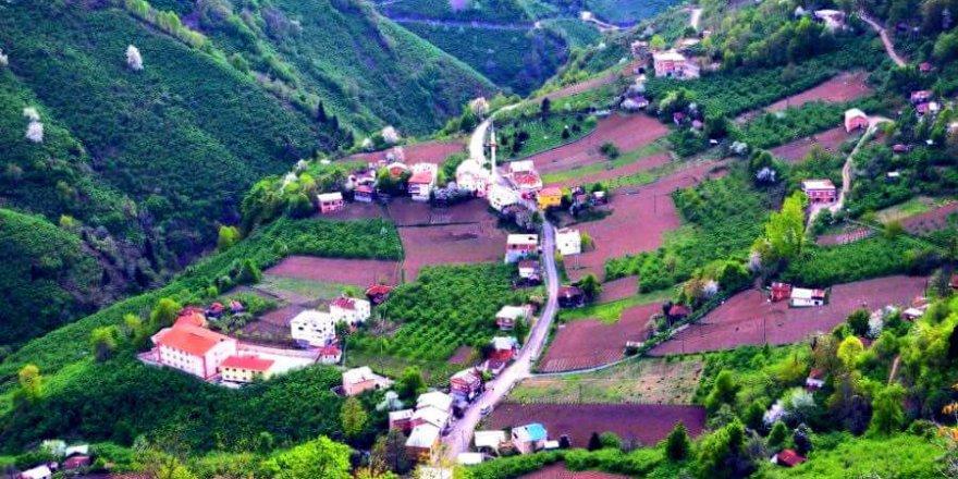 Dereli Eğriambar Köyü Resimleri