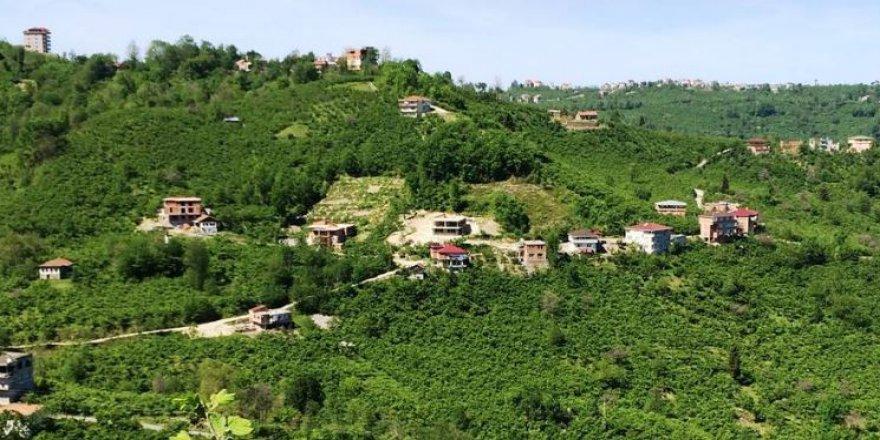 Araklı Yiğitözü Köyü Resimleri