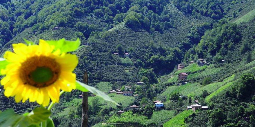 Espiye Gümüşdere Köyü Resimleri