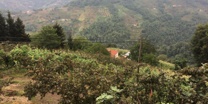 Beşikdüzü Bozlu Köyü Resimleri