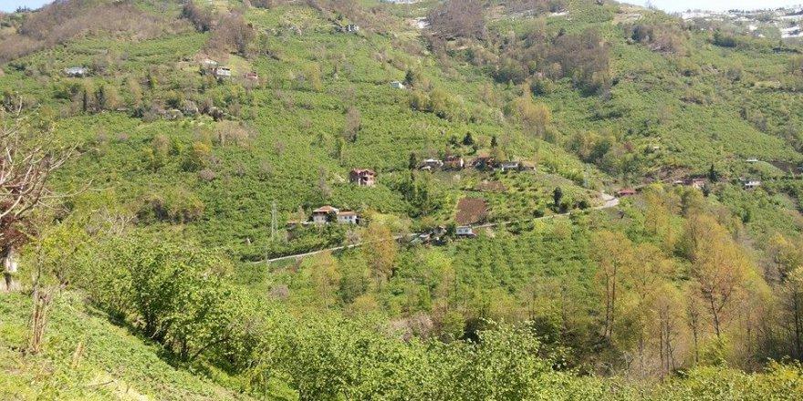 Çarşıbaşı Çallı Köyü Resimleri
