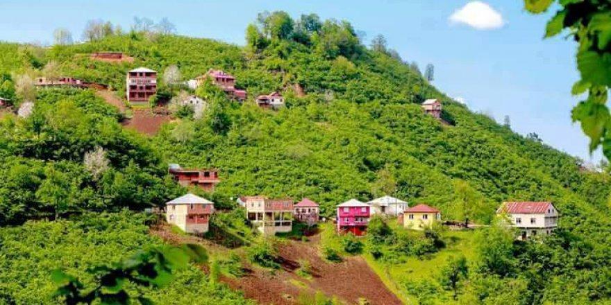 Tirebolu Danışman Köyü Resimleri