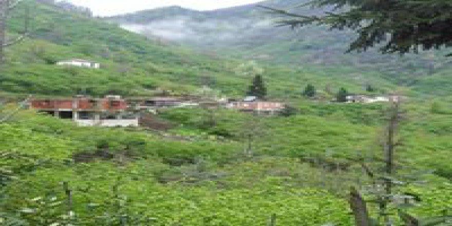 Tirebolu Fatih Köyü Resimleri