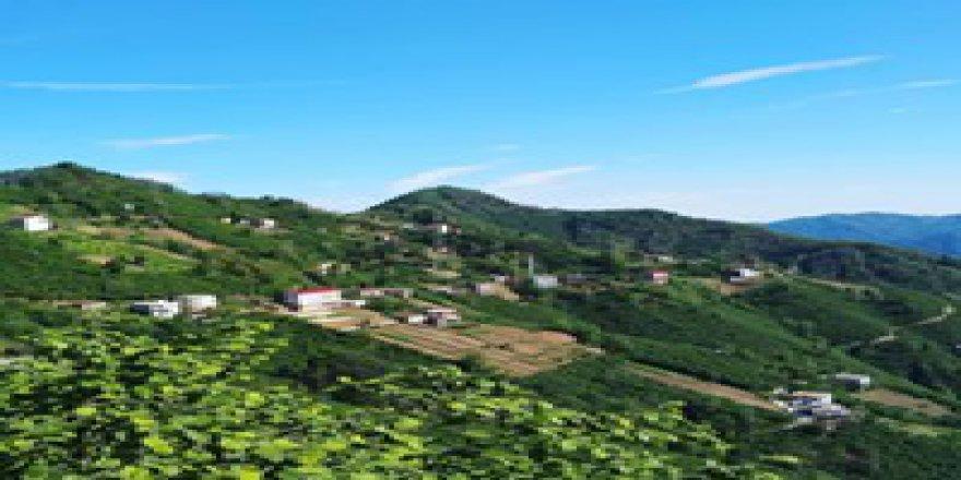 Tirebolu Kayalar Köyü Resimleri