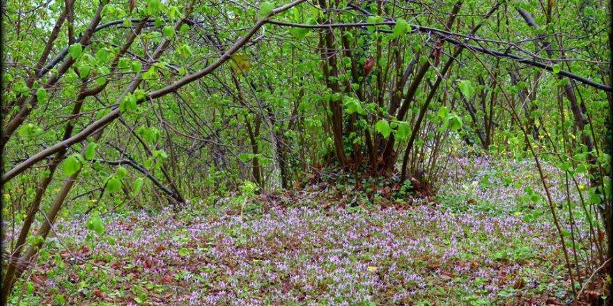 Giresun Çiçekli Köyü Resimleri