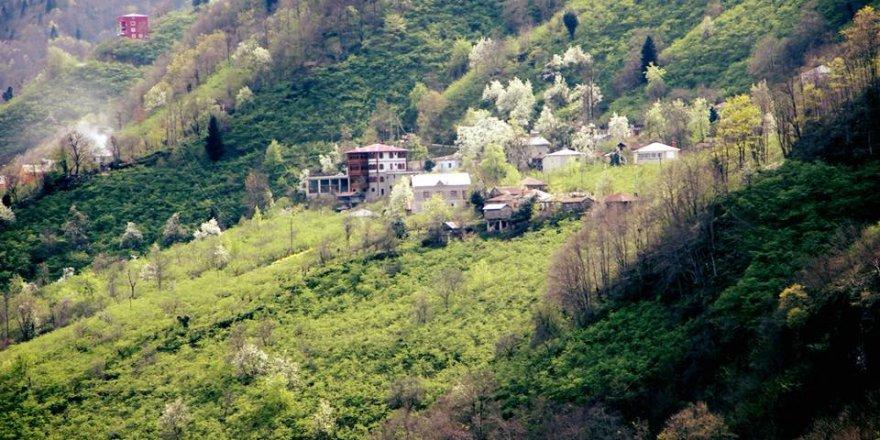 Giresun Sıvacı Köyü Resimleri