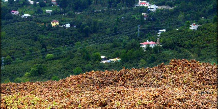 Giresun Uzgur Köyü Resimleri