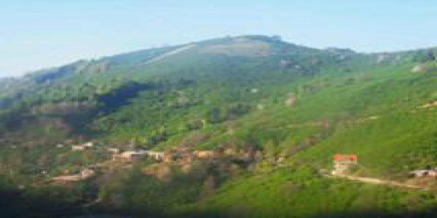 Akçakoca Sarıyayla Köyü Resimleri