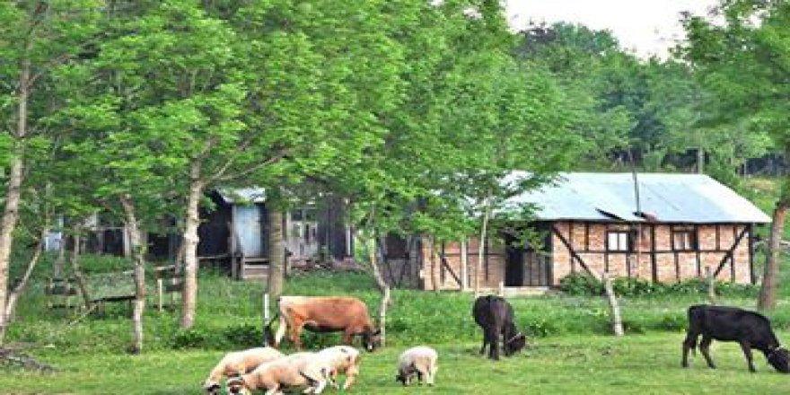 Gölyaka Yunusefendi Köyü Resimleri