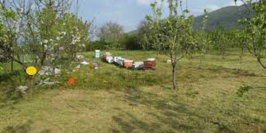 Düzce Ovapınar Köyü Resimleri