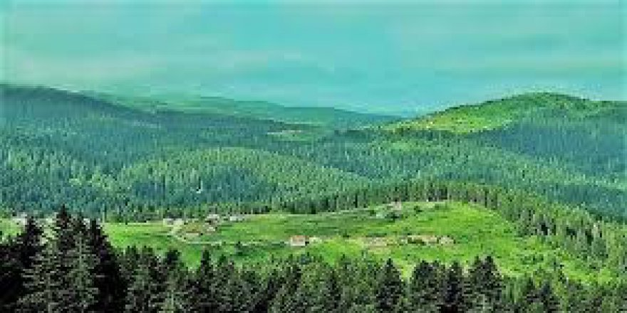 Düzce Paşakonağı Köyü Resimleri