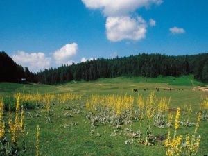 Düzce Aktarla Köyü