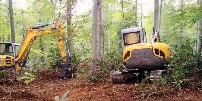 Ormanlar Gençleştiriliyor