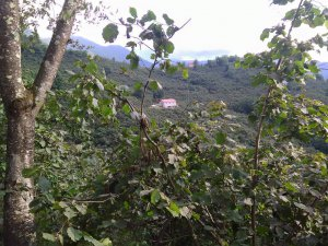 Giresun Lapa Köyü