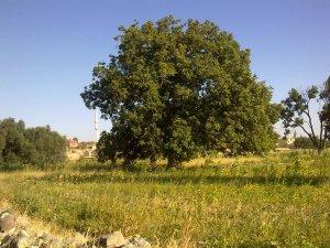 Aksaray Yalnızceviz Köyü