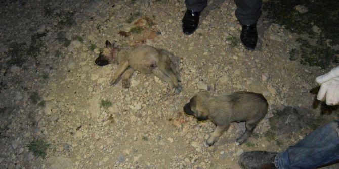 Yavru Köpekler Vahşice Katledildi