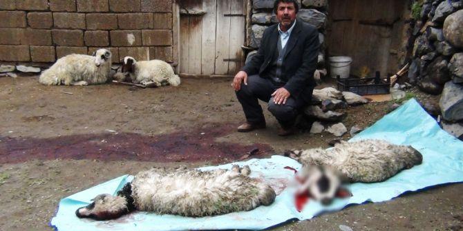 Erciş'te Sel Felaketinde 26 Kuzu Telef Oldu