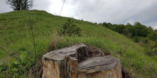 Ödül Getiren Ağaç Kesilince, Yerine Yenisini Dikti