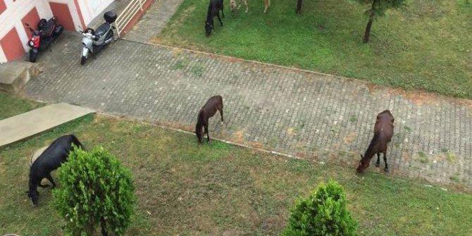 At değil çim biçme makinası