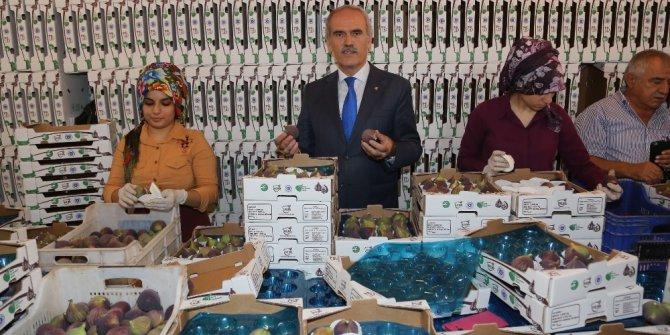 Bursa siyah inciri Uzakdoğu pazarında