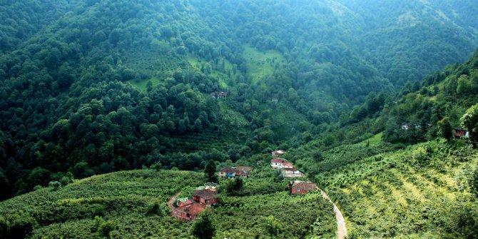 Araklı Çamlıktepe Köyü