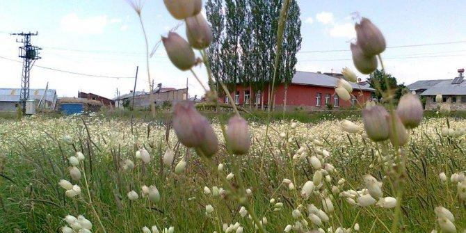 Divriği Yalnızsöğüt Köyü