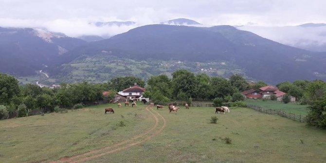 Bolu Kırha Köyü