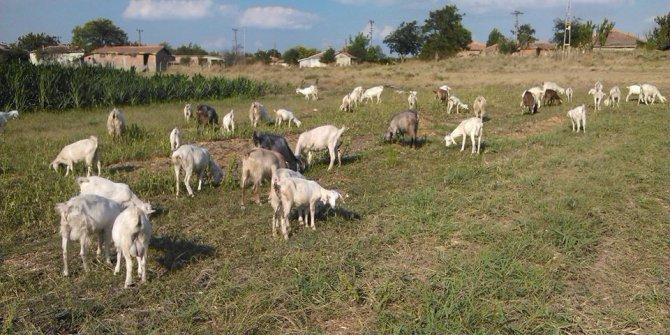 Edirne Karayusuf Köyü