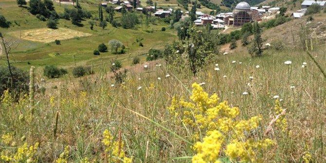Koyulhisar Yeniarslan Köyü