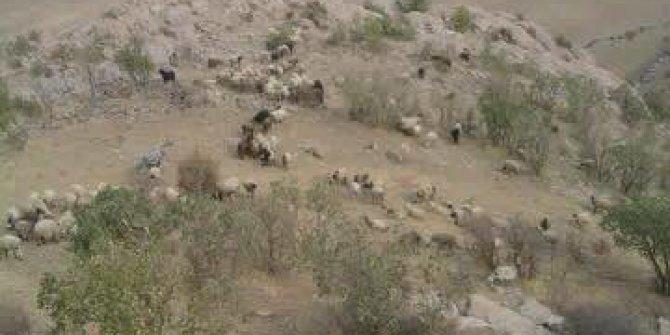 Derik Ilıca Köyü