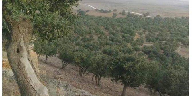 Derik Kuruçay Köyü