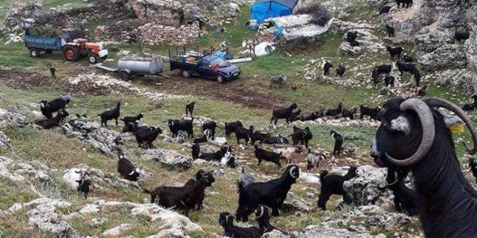 Sarıgöl Bereketli Köyü