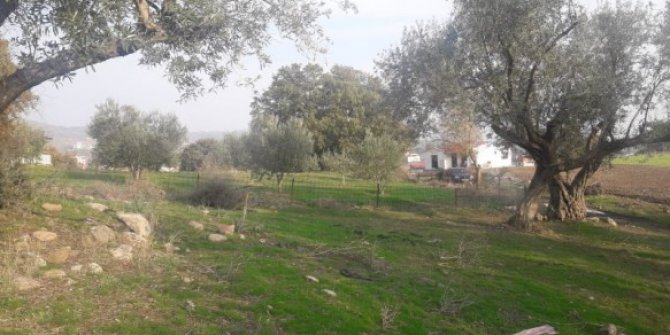 Yunusemre Pınarköy Köyü