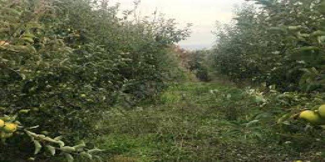 Biga  Bakacak Köyü