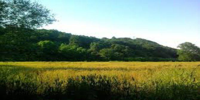 Biga  Cihadiye Köyü
