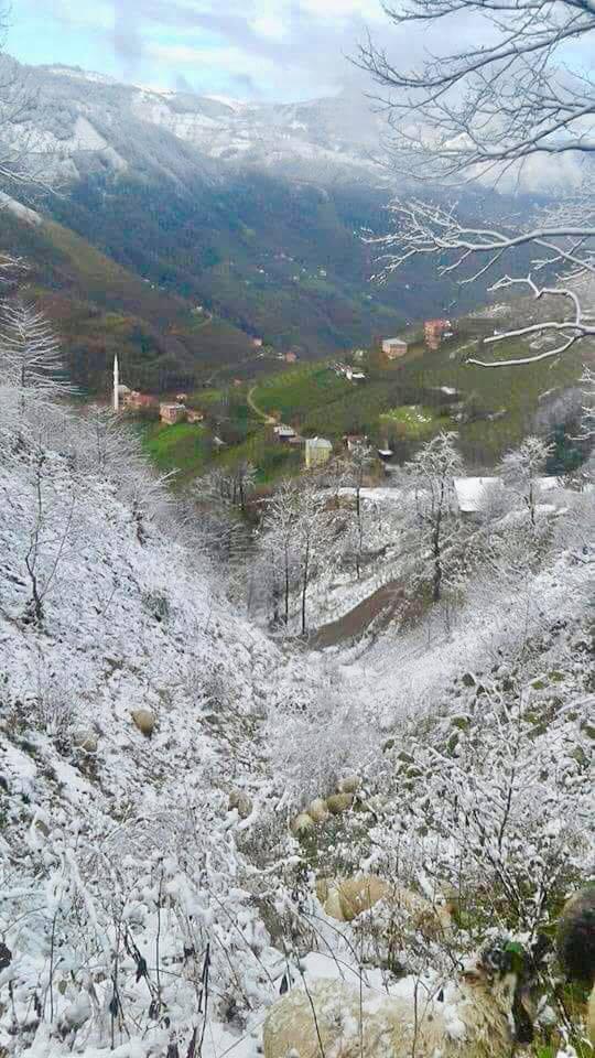 Dereli Çalköy Köyü