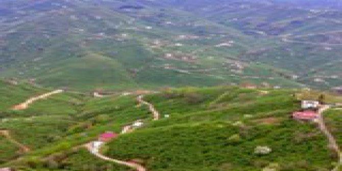 Giresun Burhaniye Köyü
