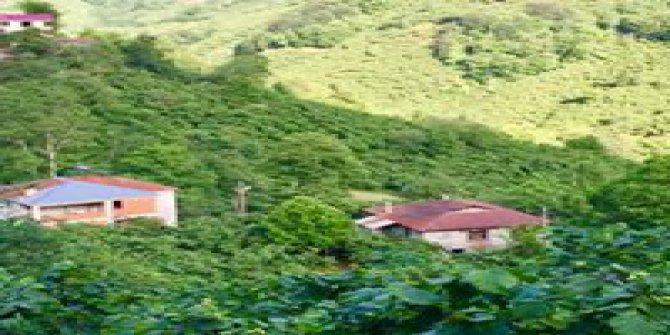 Giresun Güney Köyü